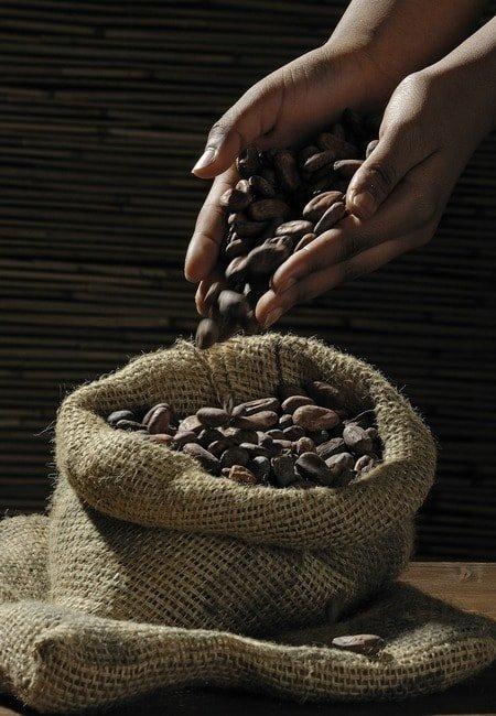 kakao zrno